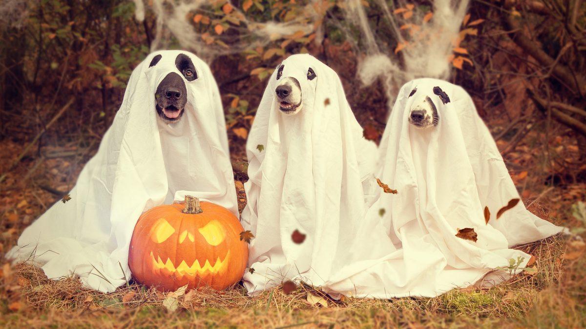 Decoração festa Halloween
